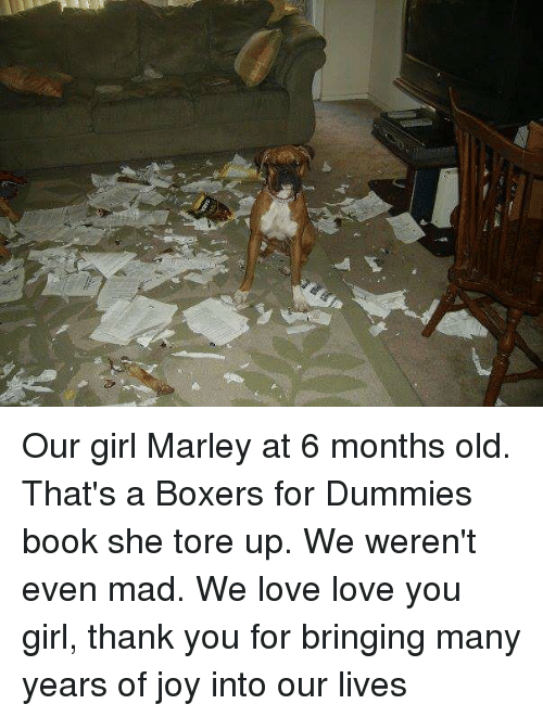 Love, Thank You, and Book: Our girl Marley at 6 months old. That's a Boxers for Dummies book she tore up. We weren't even mad. We love love you girl, thank you for bringing many years of joy into our lives