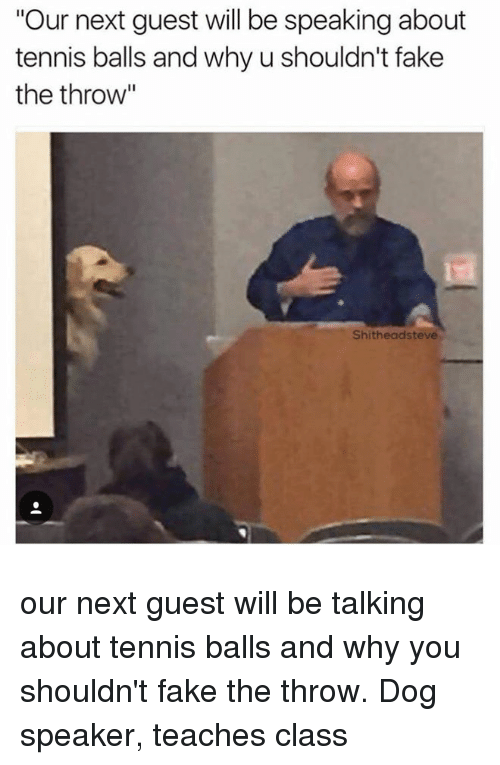 """Fake, Tennis, and Dog: """"Our next guest will be speaking about  tennis balls and why u shouldn't fake  the throw""""  Shitheadsteve our next guest will be talking about tennis balls and why you shouldn't fake the throw. Dog speaker, teaches class"""