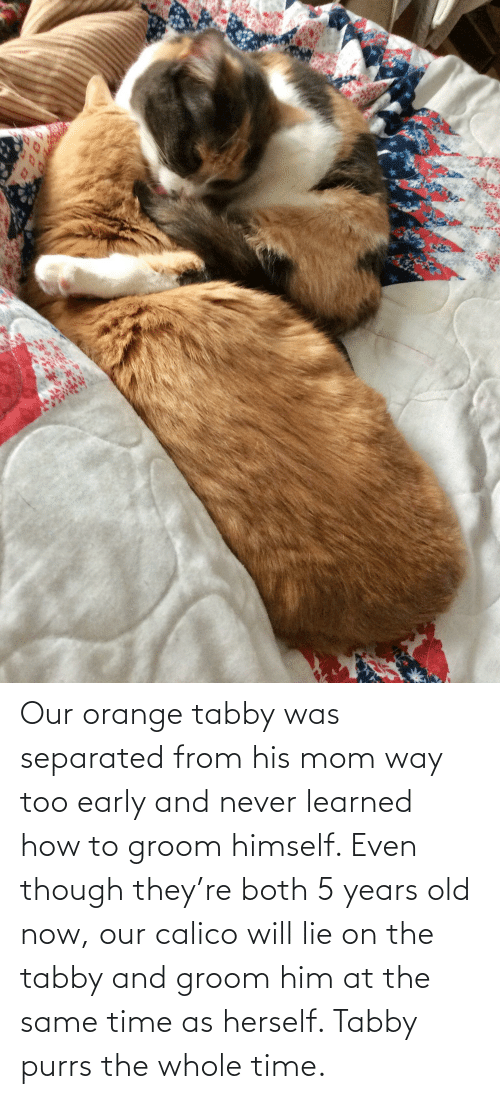 Herself: Our orange tabby was separated from his mom way too early and never learned how to groom himself. Even though they're both 5 years old now, our calico will lie on the tabby and groom him at the same time as herself. Tabby purrs the whole time.