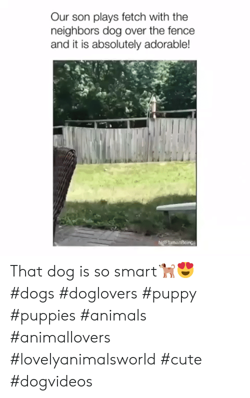 Animals, Cute, and Dogs: Our son plays fetch with the  neighbors dog over the fence  and it is absolutely adorable!  NgthumanBcings That dog is so smart🐕😍 #dogs #doglovers #puppy #puppies #animals #animallovers #lovelyanimalsworld #cute #dogvideos