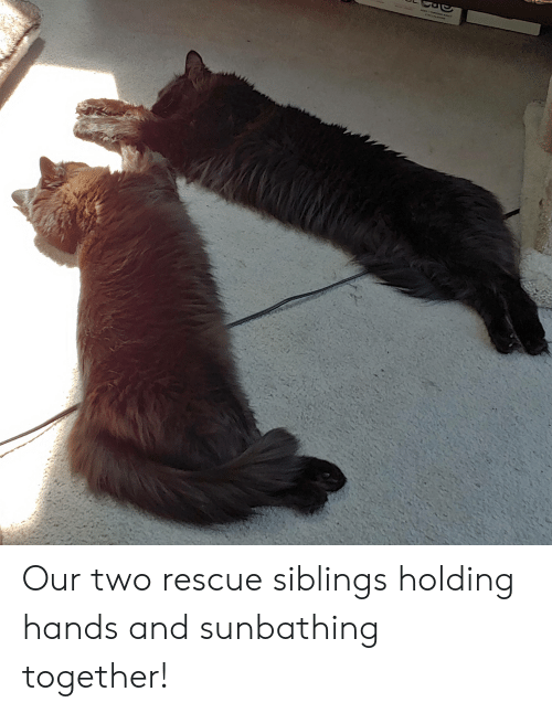 Together, Sunbathing, and  Hands: Our two rescue siblings holding hands and sunbathing together!