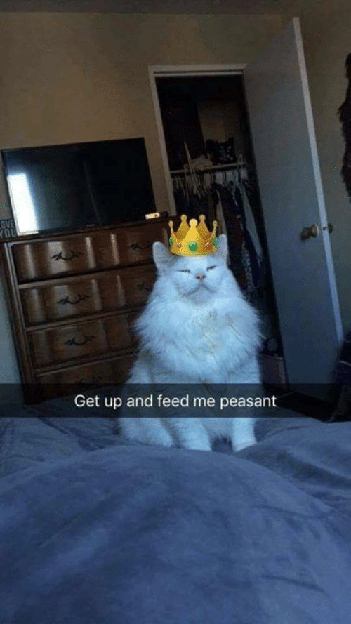 Memes, Peasant, and 🤖: OVE  Get up and feed me peasant