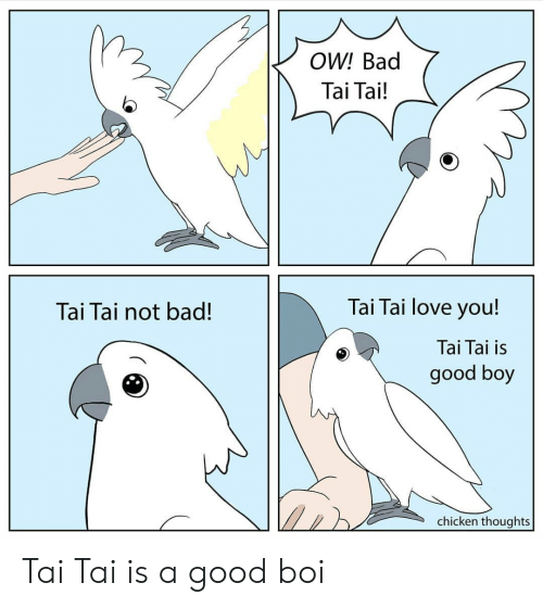 good boy: OW! Bad  Tai Tai!  Tai Tai love you!  Tai Tai not bad!  Tai Tai is  good boy  chicken thoughts Tai Tai is a good boi