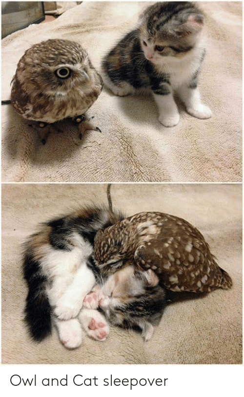 Sleepover, Cat, and Owl: Owl and Cat sleepover