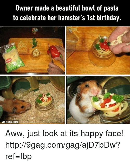 9gag, Aww, and Beautiful: Owner made a beautiful bowl of pasta  to celebrate her hamster's 1st birthday.  VIA 9GAG.COM Aww, just look at its happy face! http://9gag.com/gag/ajD7bDw?ref=fbp