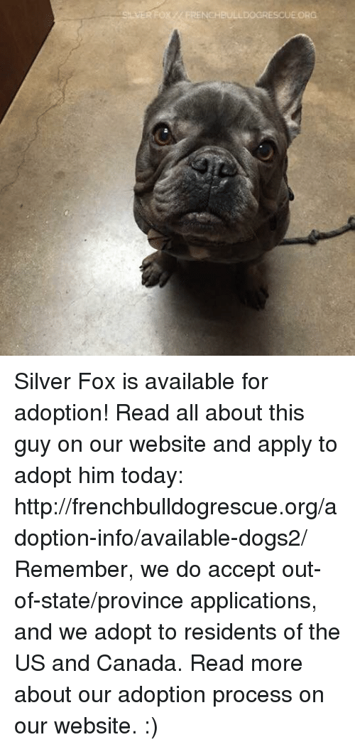 Memes, 🤖, and Fox: ox NCHBULLDOGRESCUE ORG Silver Fox is available for adoption! Read all about this guy on our website <location, likes, dislikes> and apply to adopt him today: http://frenchbulldogrescue.org/adoption-info/available-dogs2/  Remember, we do accept out-of-state/province applications, and we adopt to residents of the US and Canada. Read more about our adoption process on our website. :)