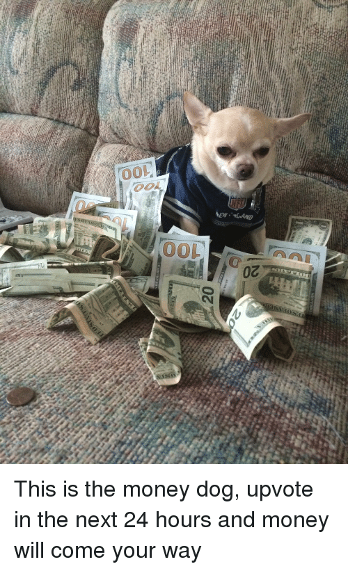 Funny, Money, and Dog: oz  20  anrp.. M74  00  oo  00 This is the money dog, upvote in the next 24 hours and money will come your way