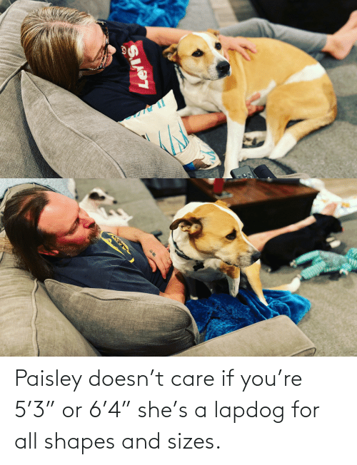 """shapes: Paisley doesn't care if you're 5'3"""" or 6'4"""" she's a lapdog for all shapes and sizes."""