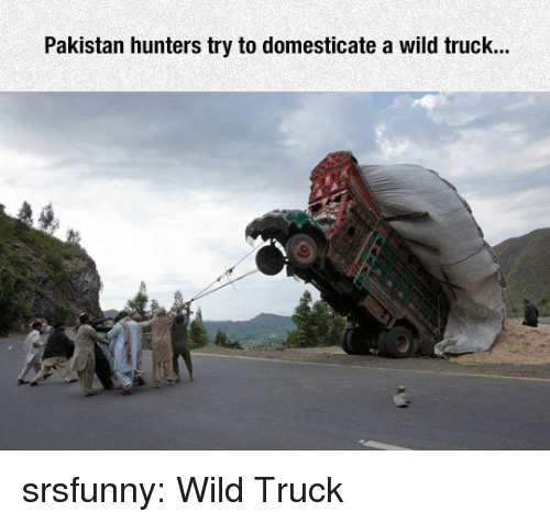 Tumblr, Blog, and Http: Pakistan hunters try to domesticate a wild truck... srsfunny:  Wild Truck