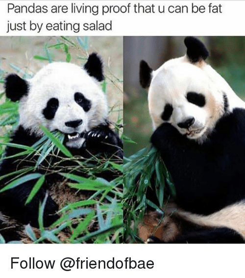 Fat, Living, and Trendy: Pandas are living proof that u can be fat  just by eating salad Follow @friendofbae