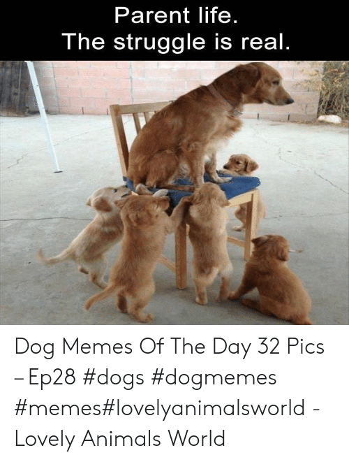 Animals, Dogs, and Life: Parent life  The struggle is real Dog Memes Of The Day 32 Pics – Ep28 #dogs #dogmemes #memes#lovelyanimalsworld - Lovely Animals World