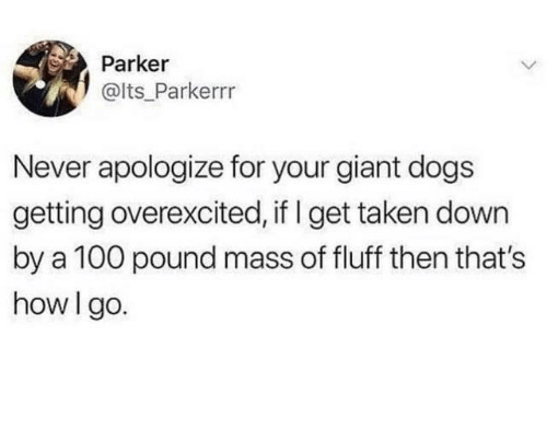 Dank, Dogs, and Taken: Parker  @lts Parkerrr  Never apologize for your giant dogs  getting overexcited, if I get taken down  by a 100 pound mass of fluff then that's  how I go.