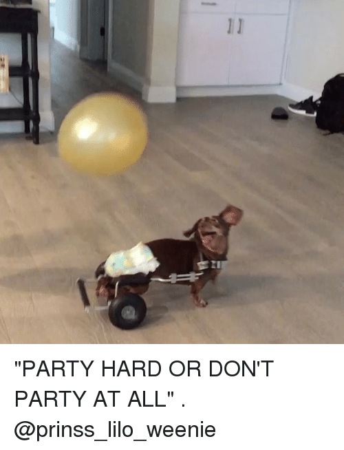 """party hard: """"PARTY HARD OR DON'T PARTY AT ALL"""" . @prinss_lilo_weenie"""