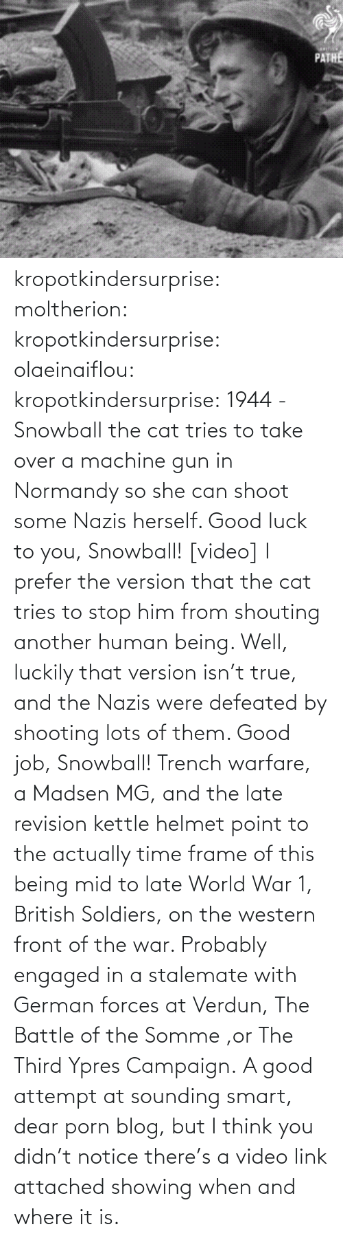 Tries: PATHE kropotkindersurprise: moltherion:  kropotkindersurprise:  olaeinaiflou:  kropotkindersurprise: 1944 - Snowball the cat tries to take over a machine gun in Normandy so she can shoot some Nazis herself. Good luck to you, Snowball! [video]  I prefer the version that the cat tries to stop him from shouting another human being.   Well, luckily that version isn't true, and the Nazis were defeated by shooting lots of them. Good job, Snowball!   Trench warfare, a Madsen MG, and the late revision kettle helmet point to the actually time frame of this being mid to late World War 1, British Soldiers, on the western front of the war. Probably engaged in a stalemate with German forces at Verdun, The Battle of the Somme ,or The Third Ypres Campaign.  A good attempt at sounding smart, dear porn blog, but I think you didn't notice there's a video link attached showing when and where it is.