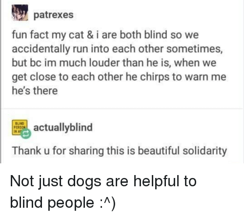 Beautiful, Dogs, and Run: patrexes  fun fact my cat & i are both blind so we  accidentally run into each other sometimes,  but bc im much louder than he is, when we  get close to each other he chirps to warn me  he's there  INE actuallyblind  BUND  PERSON  Thank u for sharing this is beautiful solidarity Not just dogs are helpful to blind people :^)