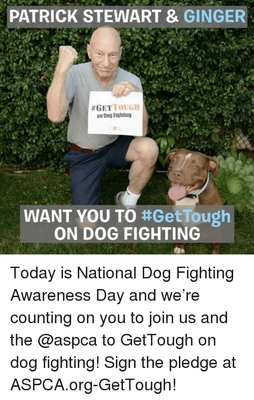 Aspca: PATRICK STEWART &  GINGER  #GET  TOUGH  on Dog Fighting  WANT YOU TO  ttGetTough  ON DOG FIGHTING Today is National Dog Fighting Awareness Day and we're counting on you to join us and the @aspca to GetTough on dog fighting! Sign the pledge at ASPCA.org-GetTough!