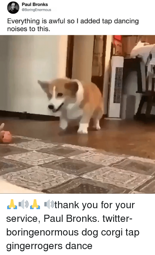 Corgi, Dancing, and Memes: Paul Bronks  @BoringEnormous  Everything is awful so l added tap dancing  noises to this 🙏🔊🙏 🔊thank you for your service, Paul Bronks. twitter-boringenormous dog corgi tap gingerrogers dance