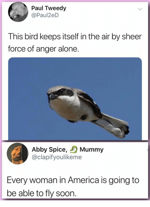 Being Alone, America, and Memes: Paul Tweedy  @Paul2eD  This bird keeps itself in the air by sheer  force of anger alone  Abby Spice, Mummy  @clapifyoulikeme  Every woman in America is going to  be able to fly soon