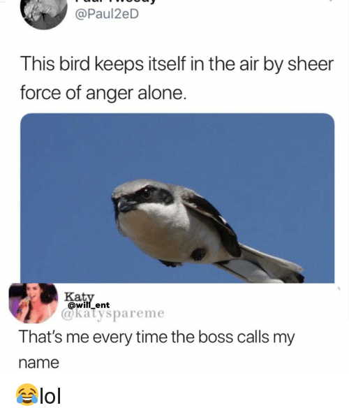 Being Alone, Memes, and Time: @Paul2eD  This bird keeps itself in the air by sheer  force of anger alone  Ka  @will ent  @katyspareme  That's me every time the boss calls my  name 😂lol