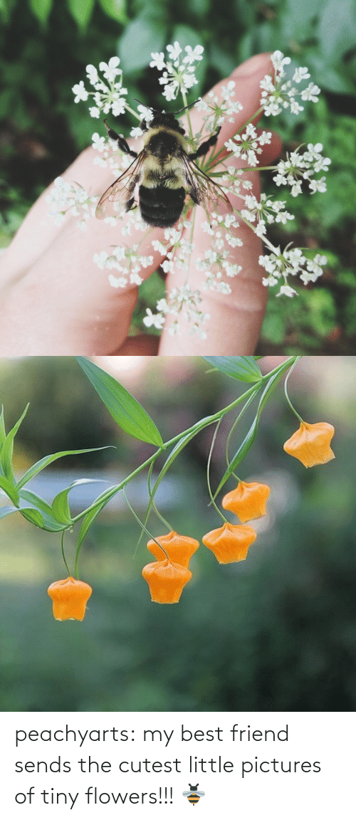 Flowers: peachyarts:  my best friend sends the cutest little pictures of tiny flowers!!! 🐝