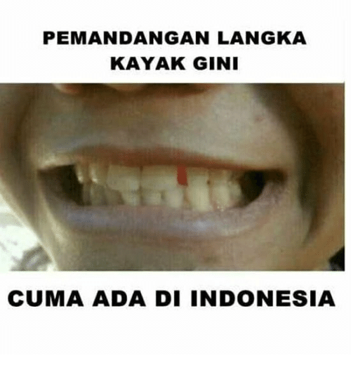 Indonesia, Kayak, and Indonesian (Language): PEMANDANGAN LANGKA  KAYAK GIN  CUMA ADA DI INDONESIA