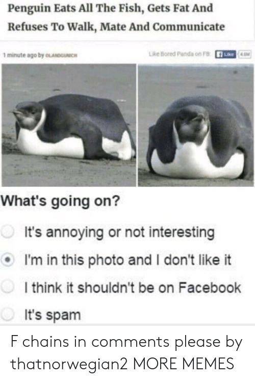 Bored, Dank, and Facebook: Penguin Eats All The Fish, Gets Fat And  Refuses To Walk, Mate And Communicate  1 minute ago by OLANDUNIC  Lhe Bored Panda on FB  R-  Lke  LEM  What's going on?  It's annoying or not interesting  I'm in this photo and I don't like it  I think it shouldn't be on Facebook  It's spam F chains in comments please by thatnorwegian2 MORE MEMES