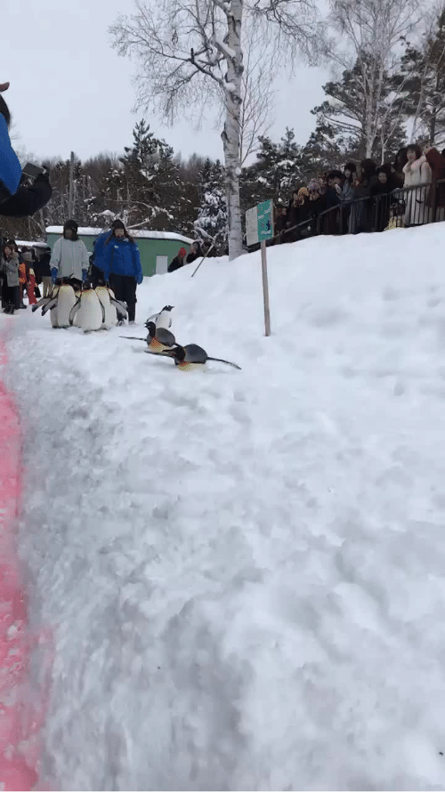 Happy, Penguin, and Penguins: Penguin Snow Zoomie