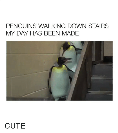 Cute, Penguins, and Girl Memes: PENGUINS WALKING DOWN STAIRS  MY DAY HAS BEEN MADE CUTE