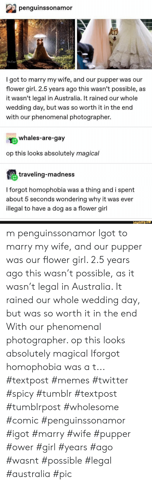 Memes, Phenomenal, and Tumblr: penguinssonamor  got to marry my wife, and our pupper was our  flower girl. 2.5 years ago this wasn't possible, as  it wasn't legal in Australia. It rained our whole  wedding day, but was so worth it in the end  with our phenomenal photographer.  whales-are-gay  op this looks absolutely magical  traveling-madness  I forgot homophobia was a thing and i spent  about 5 seconds wondering why it was ever  illegal to have a dog as a flower girl  ifunny.co m penguinssonamor Igot to marry my wife, and our pupper was our flower girl. 2.5 years ago this wasn't possible, as it wasn't legal in Australia. It rained our whole wedding day, but was so worth it in the end With our phenomenal photographer. op this looks absolutely magical Iforgot homophobia was a t... #textpost #memes #twitter #spicy #tumblr #textpost #tumblrpost #wholesome #comic #penguinssonamor #igot #marry #wife #pupper #ower #girl #years #ago #wasnt #possible #legal #australia #pic
