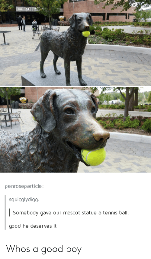 Good, Tennis, and Boy: penroseparticle  squigglydigg  Somebody gave our mascot statue a tennis ball  good he deserves it Whos a good boy