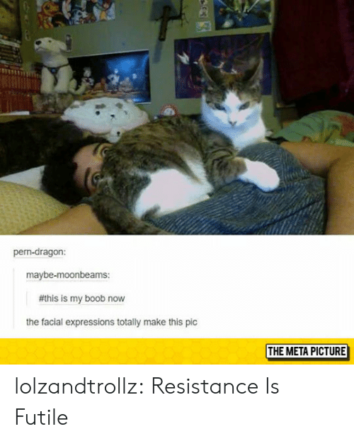 Tumblr, Blog, and Boob: pern-dragon:  maybe-moonbeams:  #this is my boob now  the facial expressions totally make this pic  THE META PICTURE lolzandtrollz:  Resistance Is Futile