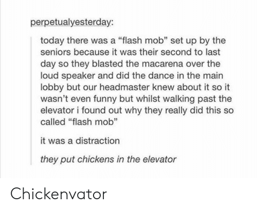 """Funny, Tumblr, and Today: perpetualyesterday:  today there was a """"flash mob"""" set up by the  seniors because it was their second to last  day so they blasted the macarena over the  loud speaker and did the dance in the main  lobby but our headmaster knew about it so it  wasn't even funny but whilst walking past the  elevator i found out why they really did this so  called """"flash mob""""  it was a distraction  they put chickens in the elevator Chickenvator"""