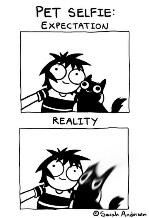 Memes, Selfie, and Reality: PET SELFIE:  EXPECTATION  REALITY  OSarah Andersen
