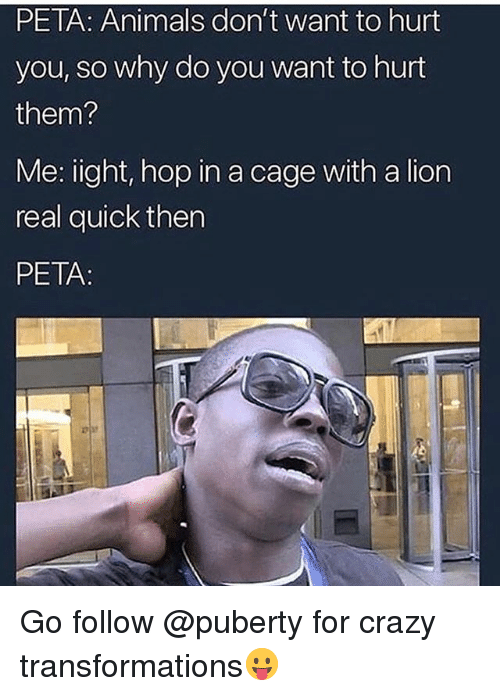 Animals, Crazy, and Memes: PETA: Animals don't want to hurt  you, so why do you want to hurt  them?  Me: ight, hop in a cage with a lion  real quick then  PETA: Go follow @puberty for crazy transformations😛
