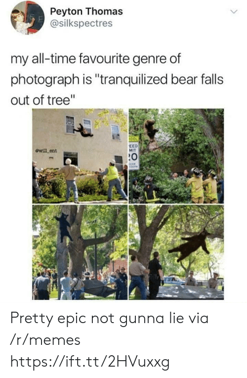 "Anaconda, Memes, and Bear: Peyton Thomas  @silkspectres  my all-time favourite genre of  photograph is ""tranquilized bear falls  out of tree""  100  ewill ent  EED  MIT  :0 Pretty epic not gunna lie via /r/memes https://ift.tt/2HVuxxg"