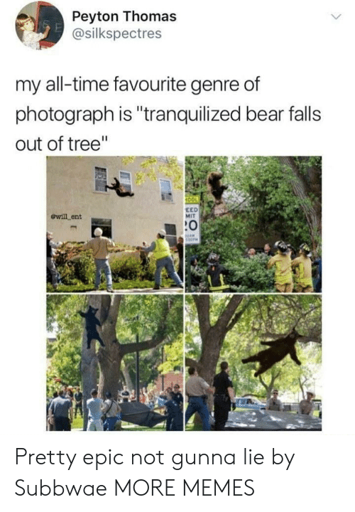 """Gunna: Peyton Thomas  @silkspectres  my all-time favourite genre of  photograph is """"tranquilized bear falls  out of tree""""  100  ewill ent  EED  MIT  :0 Pretty epic not gunna lie by Subbwae MORE MEMES"""