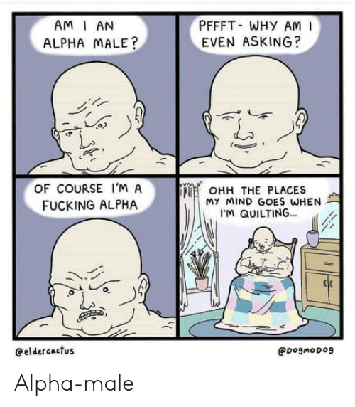 Why Am: PFFFT WHY AM  EVEN ASKING?  AM I AN  ALPHA MALE?  OF COURSE I'M A  OHH THE PLACES  My MIND GOES WHEN  M QUILTING...  FUCKING ALPHA  eeldercactus  @DogmoDog Alpha-male