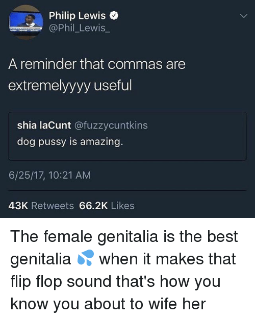 Pussy, Best, and Wife: Philip Lewis o  Phil Lewis  A reminder that commas are  extremelyyyy useful  shia laCunt @fuzzycuntkins  dog pussy is amazing.  6/25/17, 10:21 AM  43K Retweets 66.2K Likes The female genitalia is the best genitalia 💦 when it makes that flip flop sound that's how you know you about to wife her