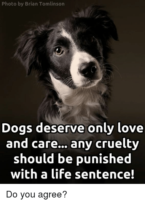 Dogs, Life, and Love: Photo by Brian Tomlinson  Dogs deserve only love  and care... any cruelty  should be punished  with a life sentence! Do you agree?
