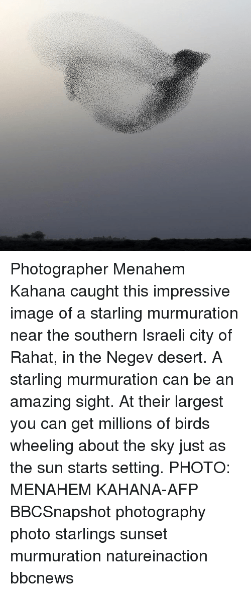 Memes, Birds, and Image: Photographer Menahem Kahana caught this impressive image of a starling murmuration near the southern Israeli city of Rahat, in the Negev desert. A starling murmuration can be an amazing sight. At their largest you can get millions of birds wheeling about the sky just as the sun starts setting. PHOTO: MENAHEM KAHANA-AFP BBCSnapshot photography photo starlings sunset murmuration natureinaction bbcnews