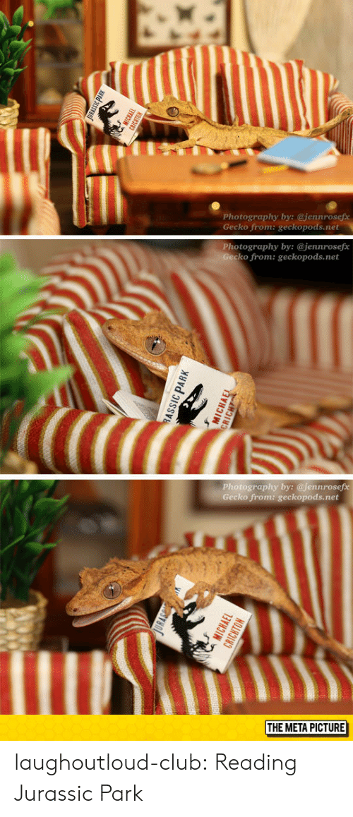 Club, Jurassic Park, and Tumblr: Photography by; @jenurosefs  Gecko from: geckopods.net  Photography by: @jennrosefe  ko from: geckopods.net  Photography by: @jennrosef  Gecko from: geckopods.net  THE META PICTURE laughoutloud-club:  Reading Jurassic Park