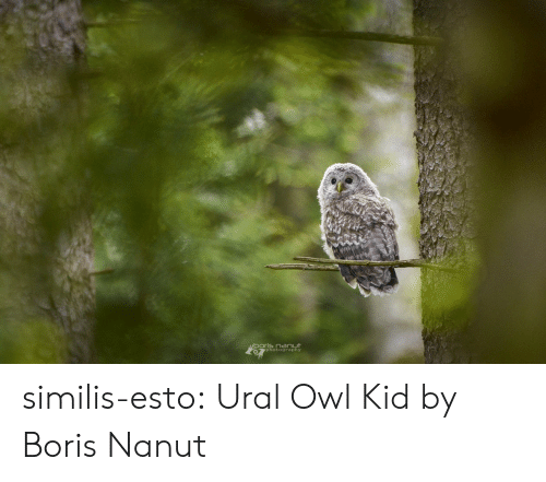 Tumblr, Blog, and Photography: photography similis-esto:   Ural Owl Kid by  Boris Nanut