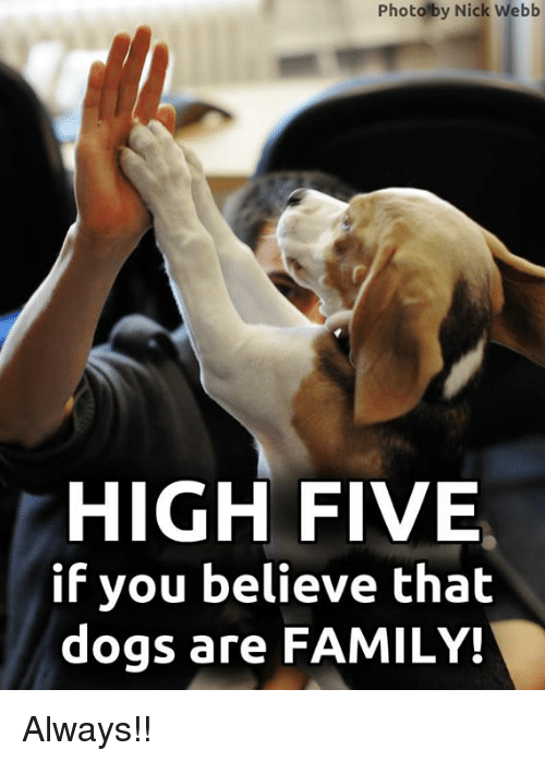 high five: Photolby Nick Webb  HIGH FIVE  if you believe thalt  dogs are FAMILY! Always!!