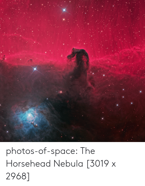 Tumblr, Blog, and Space: photos-of-space:  The Horsehead Nebula [3019 x 2968]