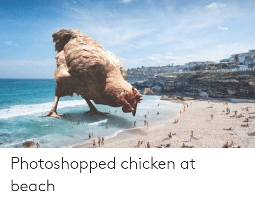 Chicken: Photoshopped chicken at beach