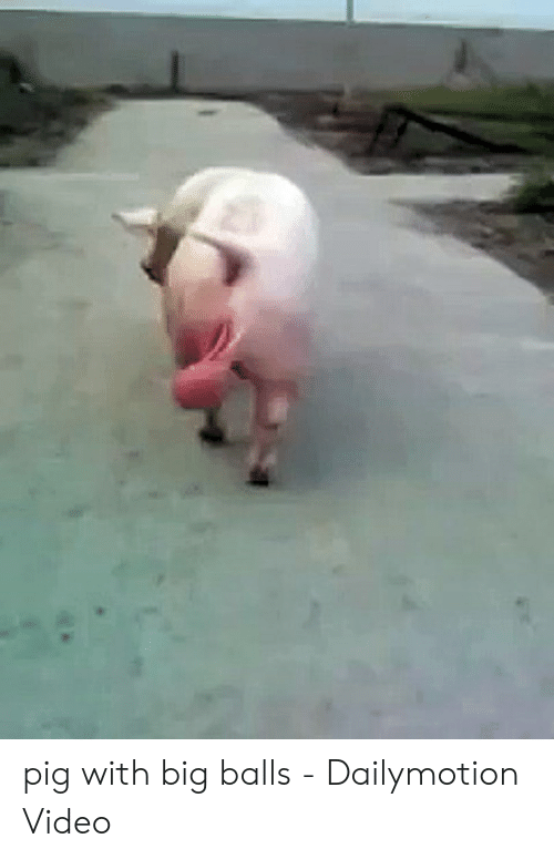 🦅 25+ Best Memes About Pig With Big Balls | Pig With Big