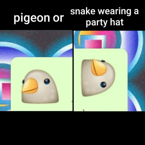 Memes, Party, and 🤖: pigeon or Shake wearing a  party hat
