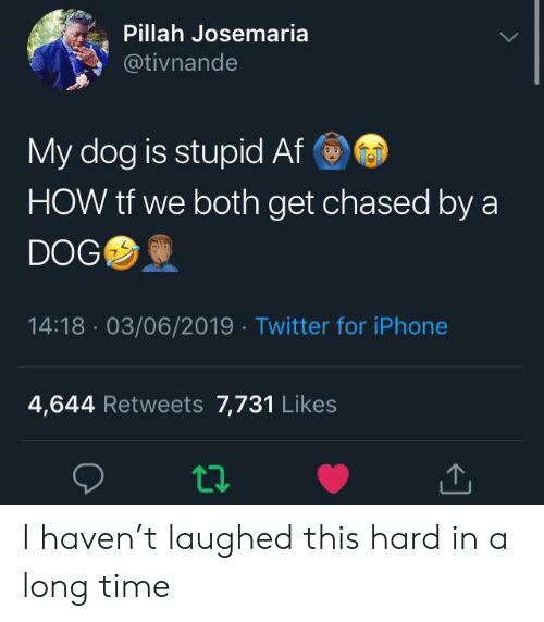 Chased: Pillah Josemaria  @tivnande  My dog is stupid Af  HOW tf we both get chased by a  DOG  14:18 03/06/2019 Twitter for iPhone  4,644 Retweets 7,731 Likes I haven't laughed this hard in a long time