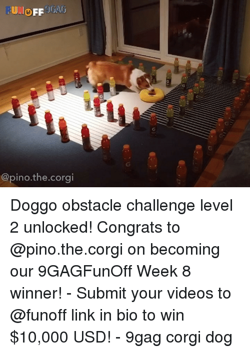 9gag, Corgi, and Memes: @pino.the.corgi Doggo obstacle challenge level 2 unlocked! Congrats to @pino.the.corgi on becoming our 9GAGFunOff Week 8 winner! - Submit your videos to @funoff link in bio to win $10,000 USD! - 9gag corgi dog