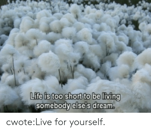 Life, Target, and Tumblr: PK  Life is too short to be living  somebody else's dream. cwote:Live for yourself.